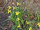 Frühling 2008