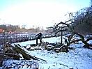 Winter auf Hohenbuchen 2008